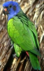 Talky Parrot